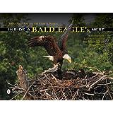Inside a Bald Eagle's Nest: A Photographic Journey Through the American Bald Eagle Nesting Season