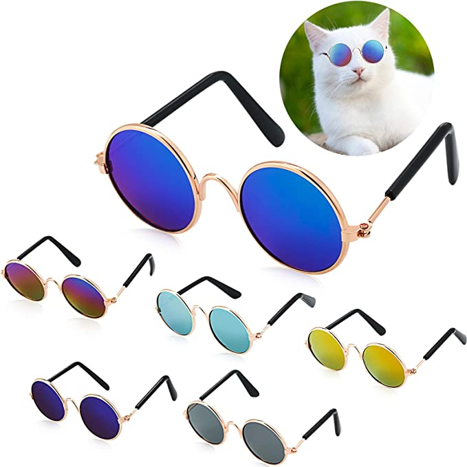 Cat 14 Beautiful Little Puppy Sweet Cute Animal Poster Kitty Sunglasses Picture