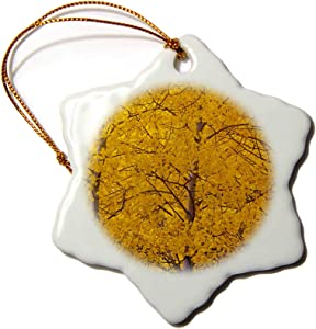 3dRose USA, Colorado, Castle Valley, Aspens, Autumn - US06 BJY0004 -. - Ornaments (ORN_143097_1)