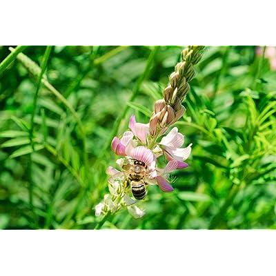 Intermountain West Honey Bee Pasture Blend (2000 sq ft) : Garden & Outdoor