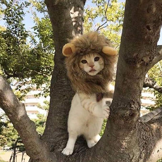 JTMM Peluca de Melena para Gato y Perro pequeño, Disfraz de león, Vestido de Halloween con Orejas Fiesta de Mascotas Fiesta de Disfraces Ropa para Gatos: ...