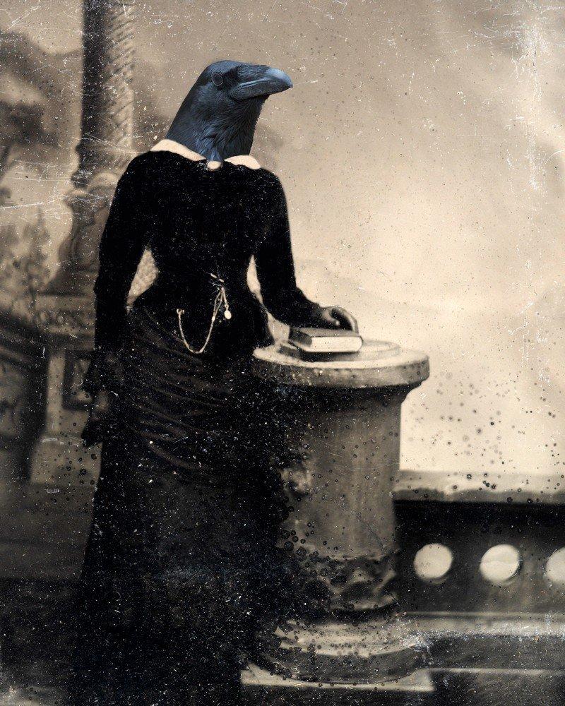 d6a6078f Amazon.com: Victorian RAVEN LADY crow woman bird portrait feathered ...