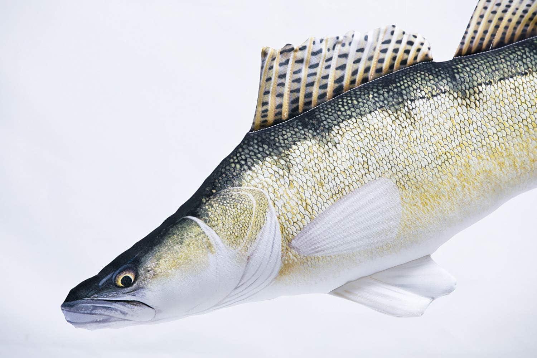 Wobbler Zander Barsch Hecht Forelle Rapfen Spinnfischen Angeln Kunstköder Fische