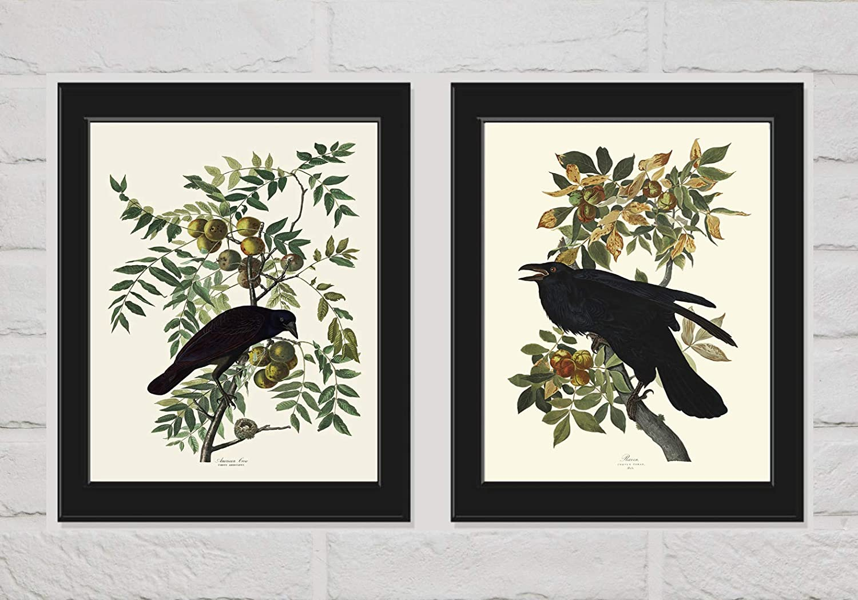 Crow and Raven James Audubon Wall Art Print Set of 2 Prints Beautiful Birds Home Decor LoveThePrint Unframed