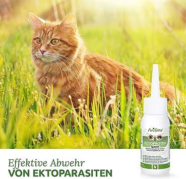 AniForte Ectoprotex Cat Spot On para Gatos 50 ml - Repelente de Larga duración para garrapatas, pulgas, ácaros y parásitos, Protección efectiva contra garrapatas: Amazon.es: Productos para mascotas