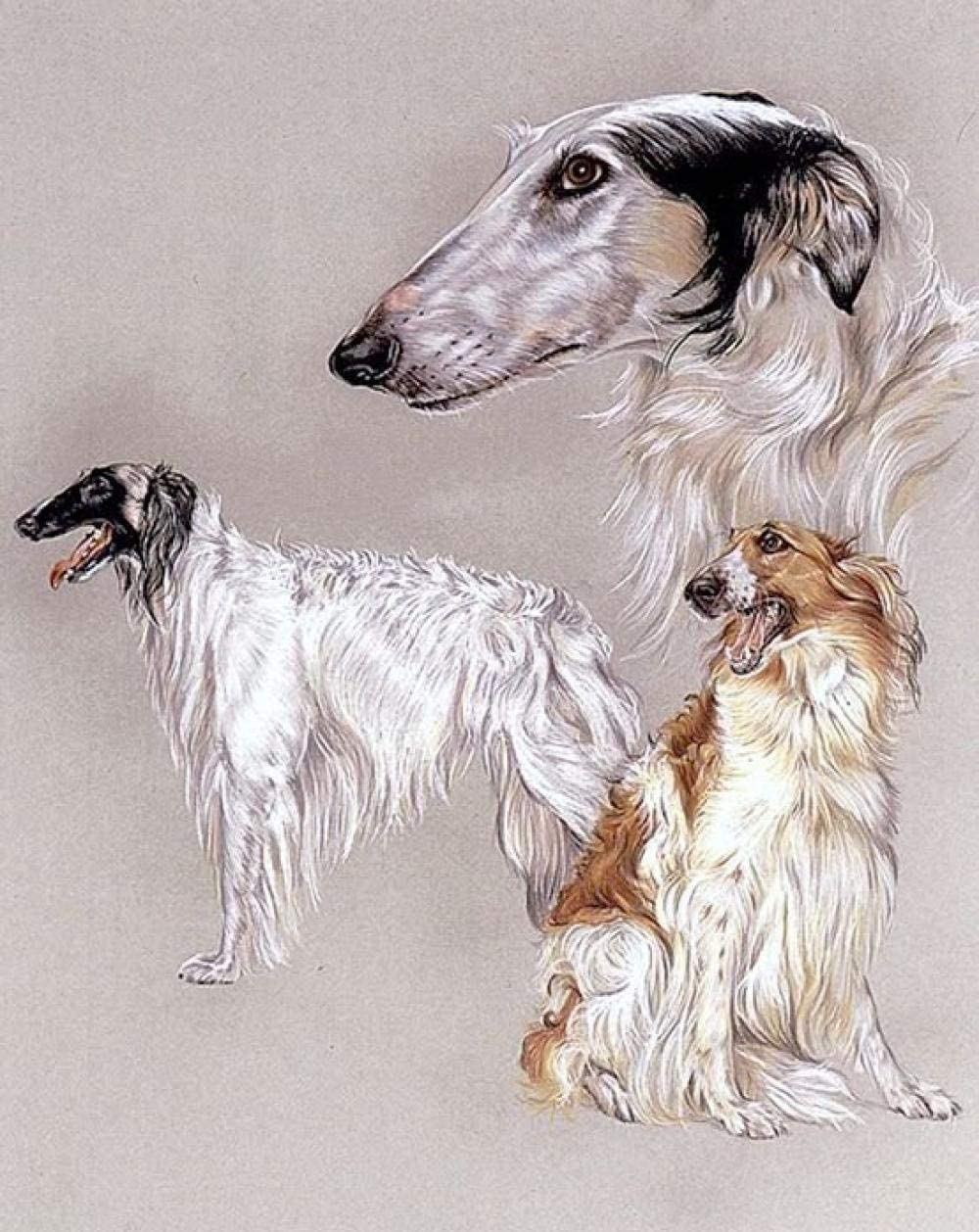 DIY Oil Painting Paint by Number Kits Painting Whippet Dog Adults and Kids Arts Craft for Home Wall Decor 40X50Cm