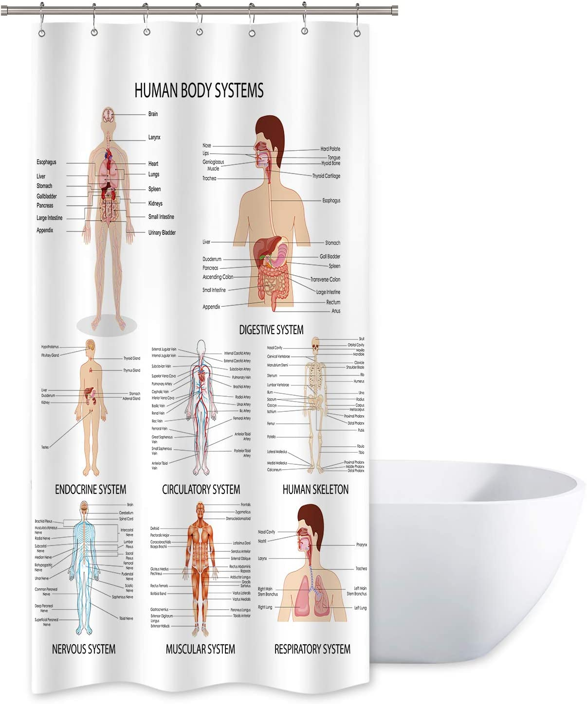 Riyidecor Human Organ Shower Curtain Anatomy Organ Body Structures Cell Life Medical Illustration Decor Bathroom Set Polyester Waterproof 36Wx72H Inch with Plastic Hooks 12 Pack