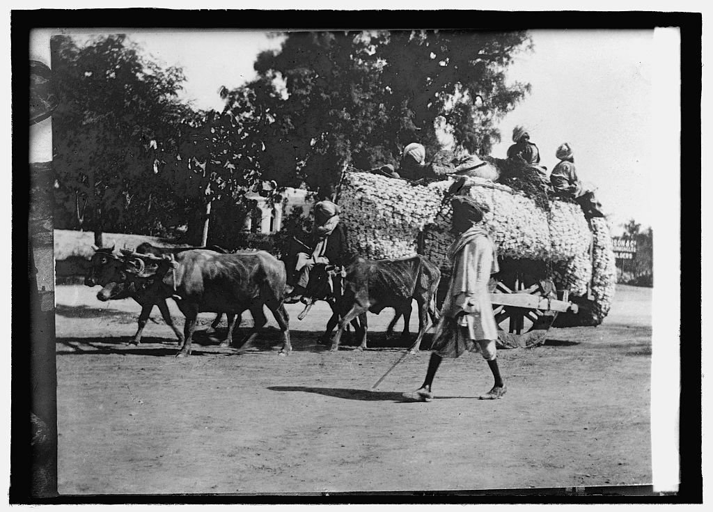 Vintography 16 x 20 Reprinted Old Photo ofTransportation in India 1914 National Photo Co 15a