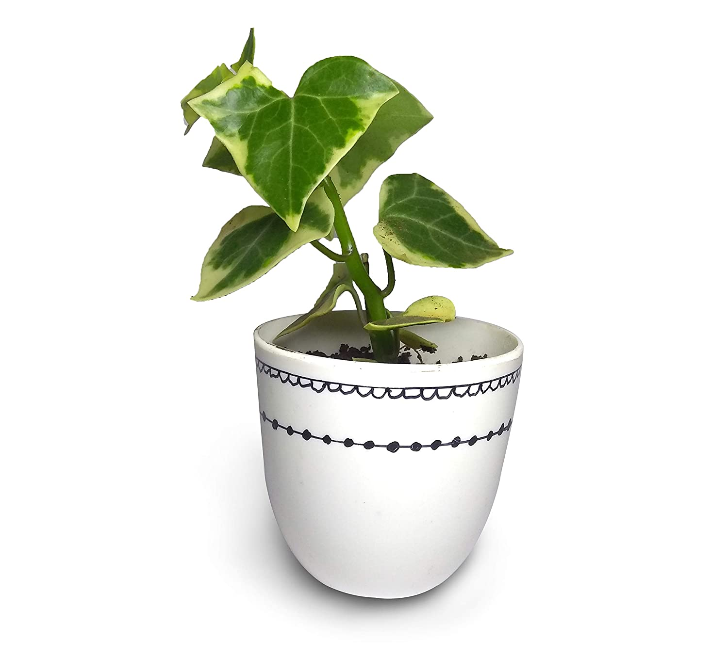 Indoor Plants. Interior Design. Home Decor. GPD