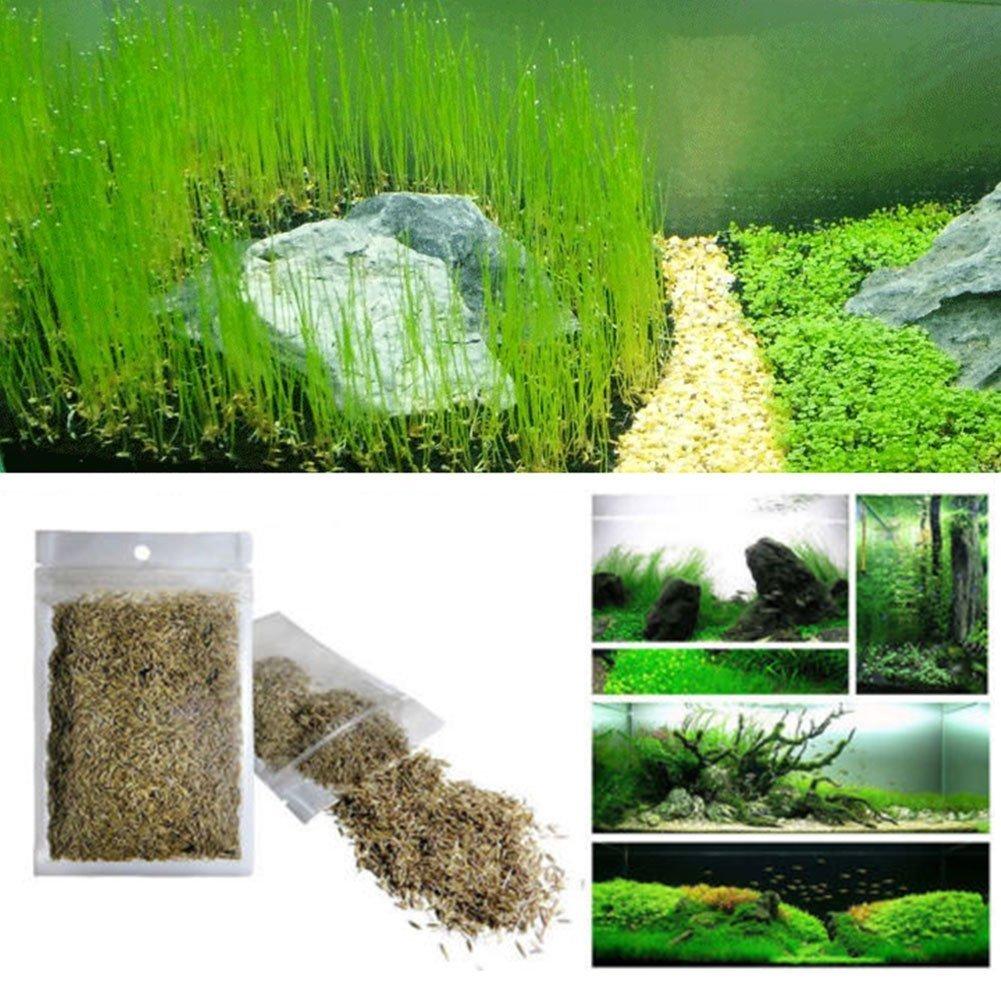 Semillas de plantas para pecera, plantas de agua viva con perspectivas de hierba - fácil rápido crecimiento, 10 ml - Césped acuático para decoración de ...