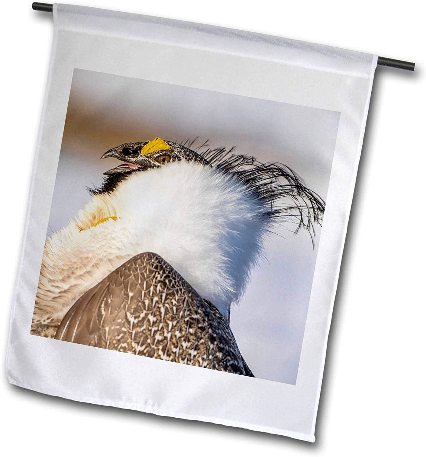 3dRose USA, WY. Portrait of a Male Greater Sage Grouse displaying - Flags (fl_333209_1)