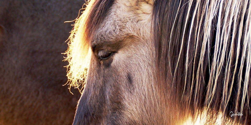 Wildpferd 1 – Exclusivo diseño de caballo XXL – Cuadro de 80 x 40 cm – Formato horizontal – Impresión digital sobre lienzo – Lienzo – bastidor 2 cm – Caballo Pony – Granja – Arte grande