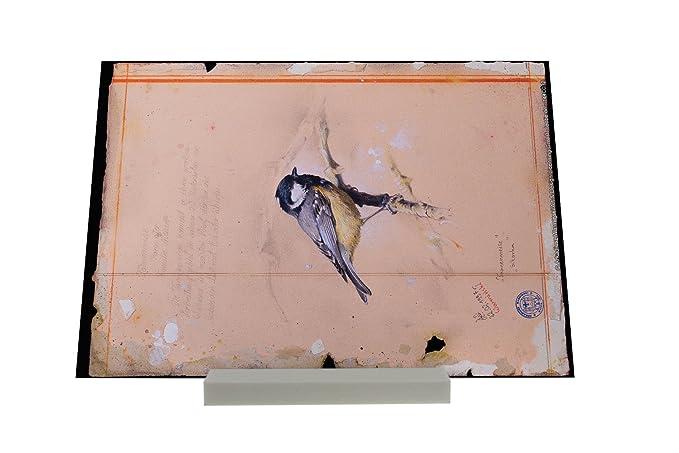 impresión del arte Soporte Fotografias Práctica Veterinaria Warminski Tit del carbón Letrero: Amazon.es: Hogar