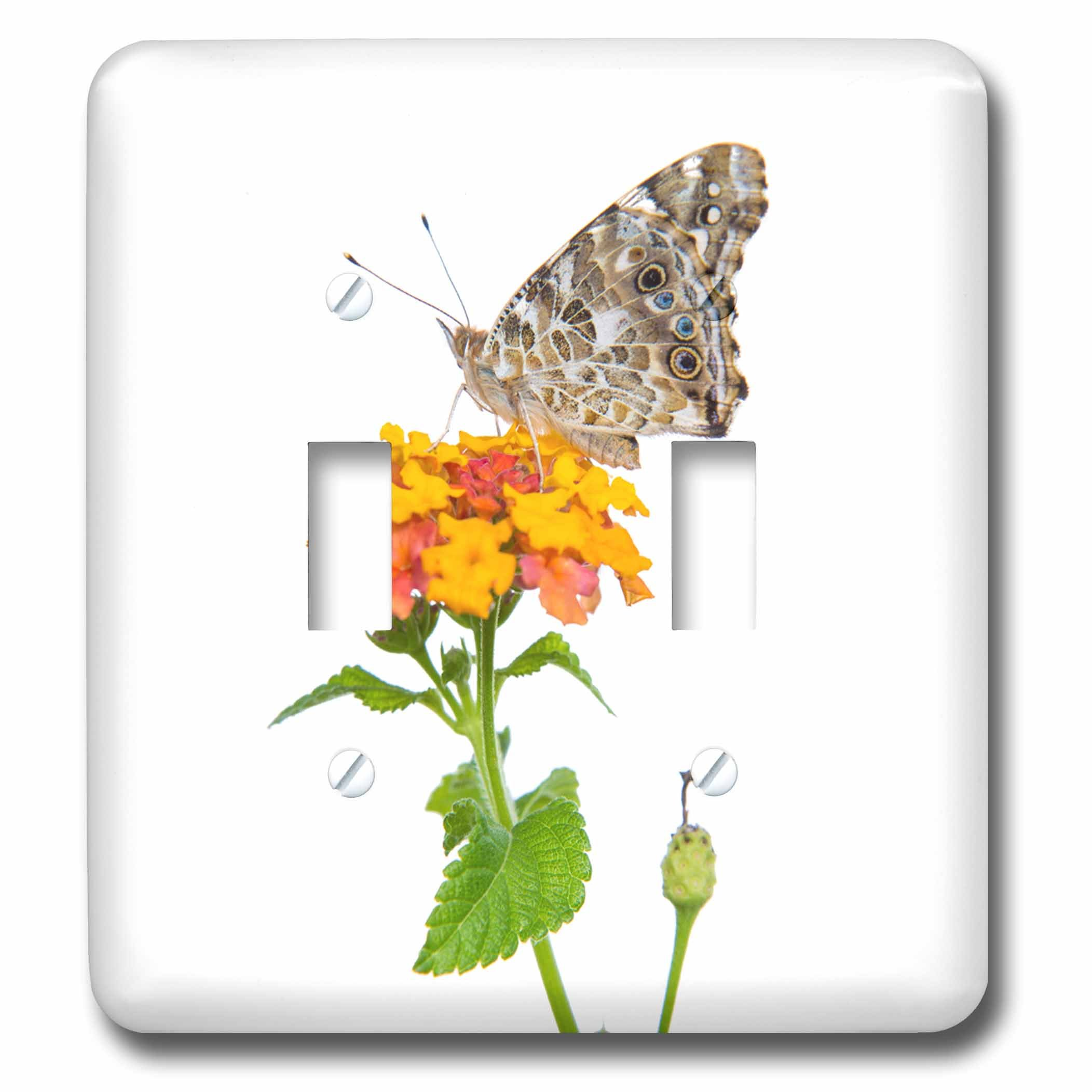 3dRose Danita Delimont - Butterflies - Painted Lady Butterfly on lantana, Marion County, Illinois - Light Switch Covers - double toggle switch (lsp_259337_2)