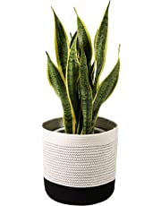 "TIMEYARD Woven Cotton Rope Plant Basket for 10"" Flower Pot Floor Indoor Planters, 11"" x 11"" Storage Basket Organizer Modern Home Decor, Black and White Stripes"