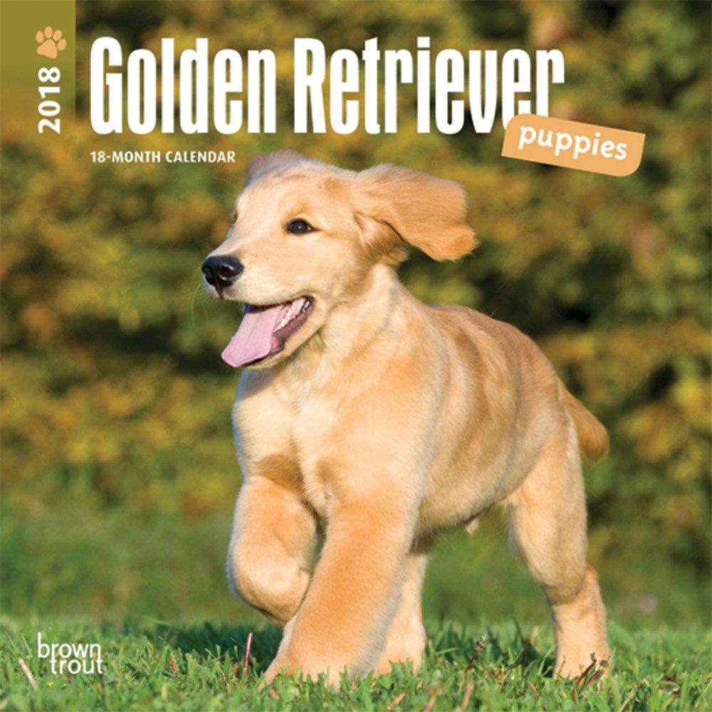 amazon golden retriever puppies 2018 calendar browntrout