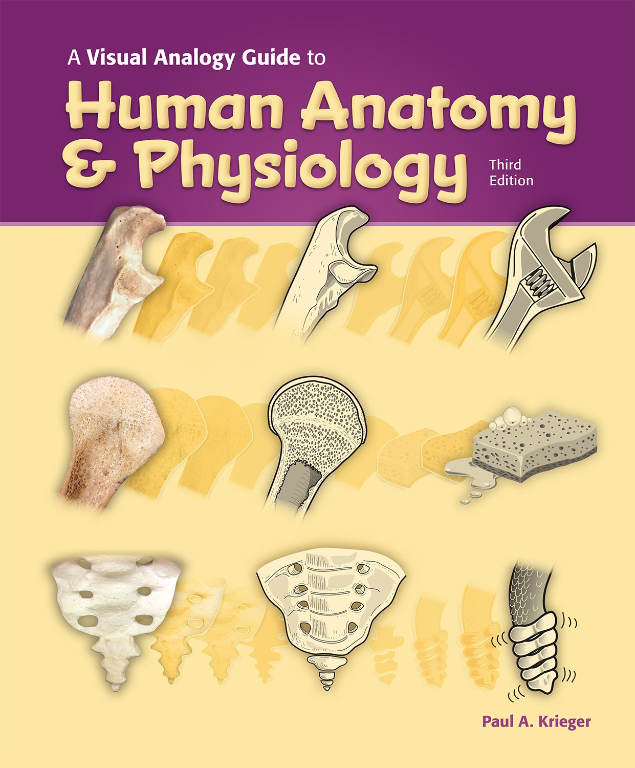 A Visual Analogy Guide To Human Anatomy And Physiology 3e Amazon