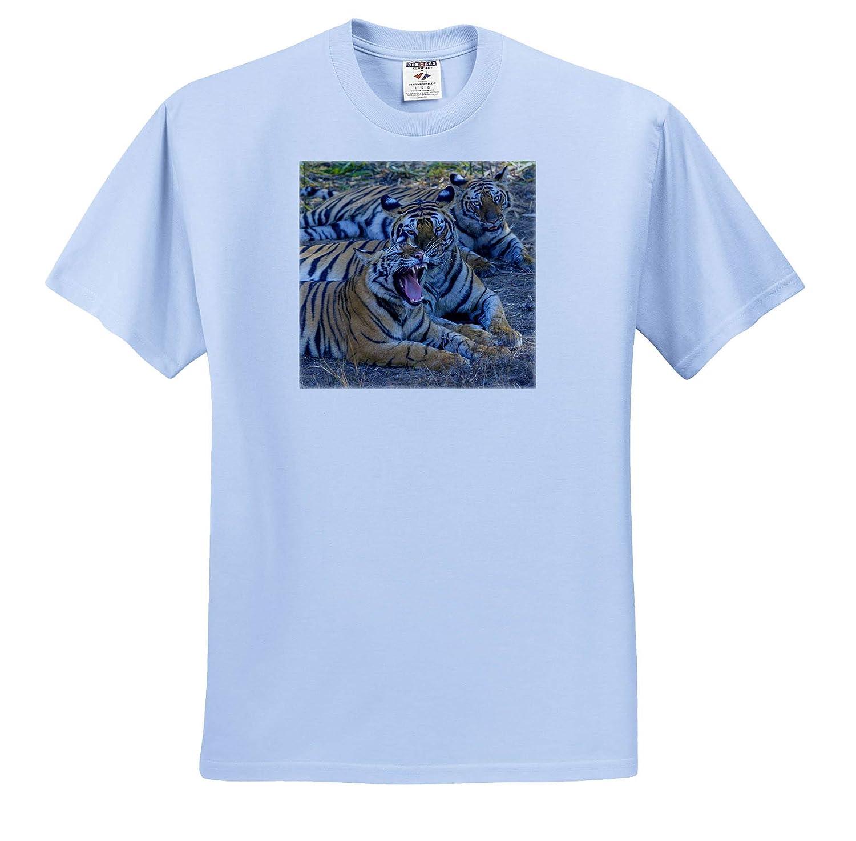 Adult T-Shirt XL 3dRose Danita Delimont ts/_312704 Bandhavgarh National Park Bengal Tigers Tigers India