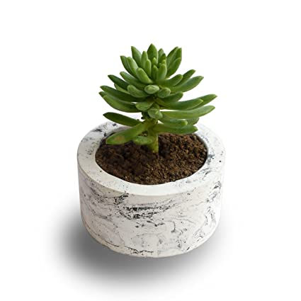 Paradox Round Cement Planter/Vase / Flower Pot/Home Decor