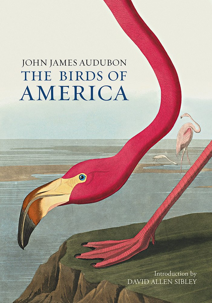 Print John Audubon Nature Birds Of America 14
