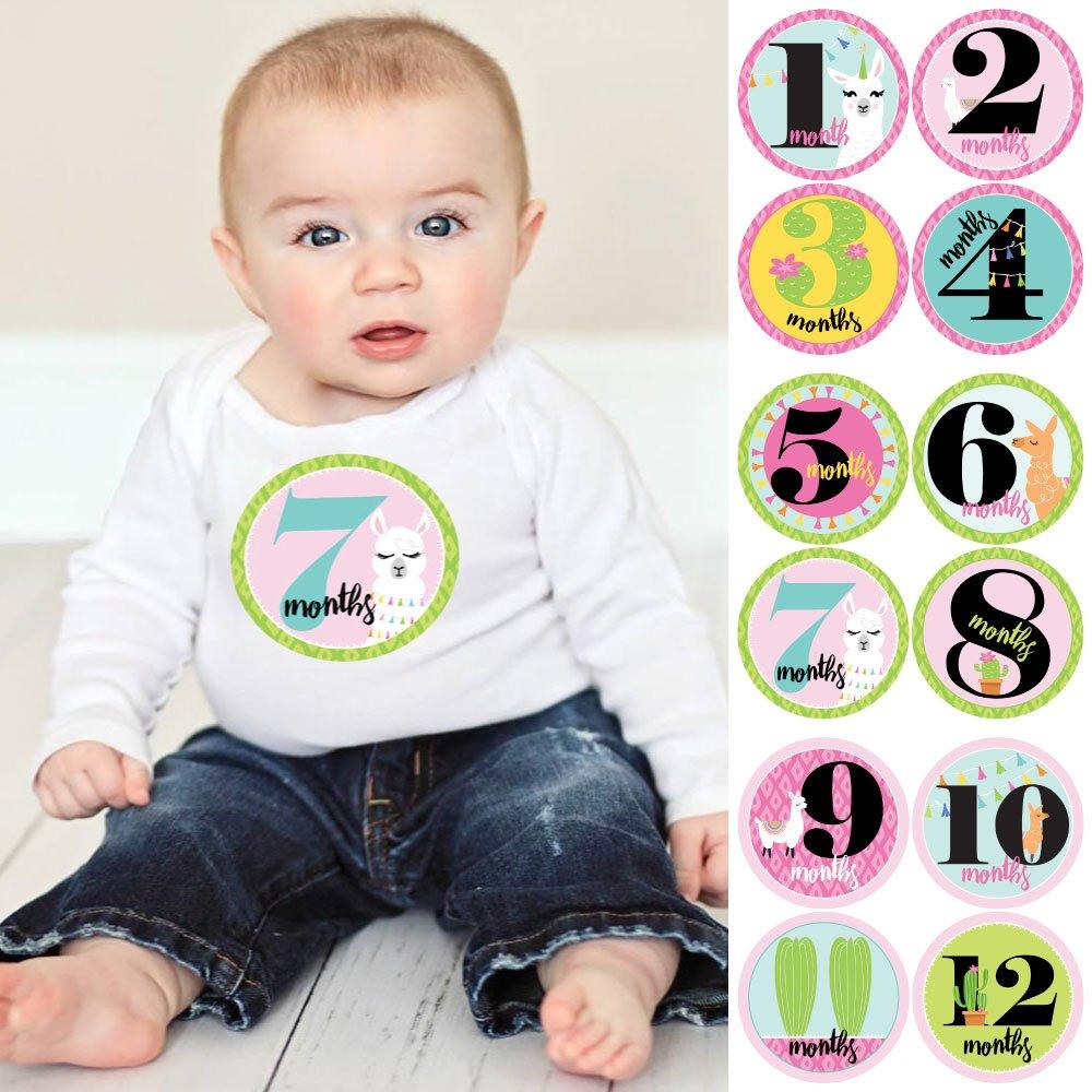 Amazon Com Baby Girl Monthly Sticker Set Whole Llama Fun Baby Shower Gift Ideas 12 Piece Baby