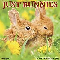 Just Bunnies 2020 Calendar