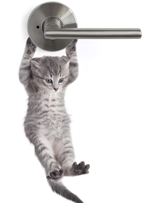 Cute Hanging Baby Kitten cat Door Decal Sticker #6067A