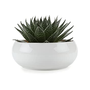T4u 165cm ceramic white round simple design succulent plant pot t4u 165cm ceramic white round simple design succulent plant potcactus plant pot flower mightylinksfo