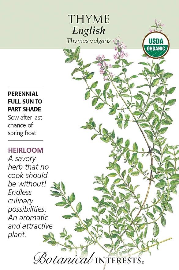 Certified Organic 350 mg English Thyme Seeds