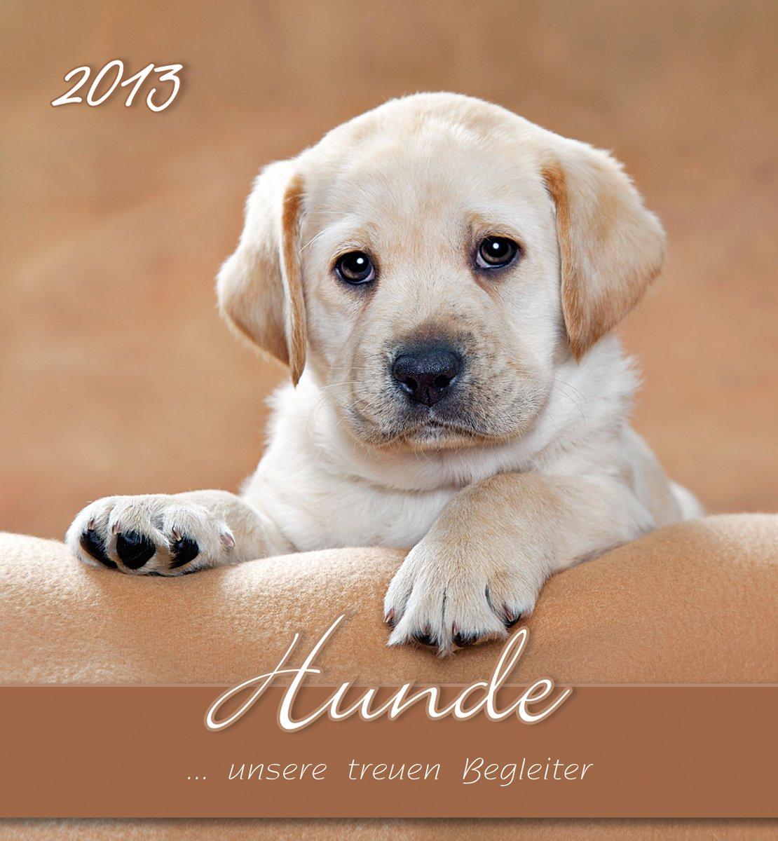 Hunde, Postkartenkalender 2013