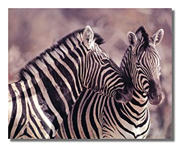 Exceptional Wild African Safari Striped Zebra Wall Picture Art Print