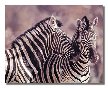 Amazon.com: Wild African Safari Striped Zebra Wall Picture Art Print ...