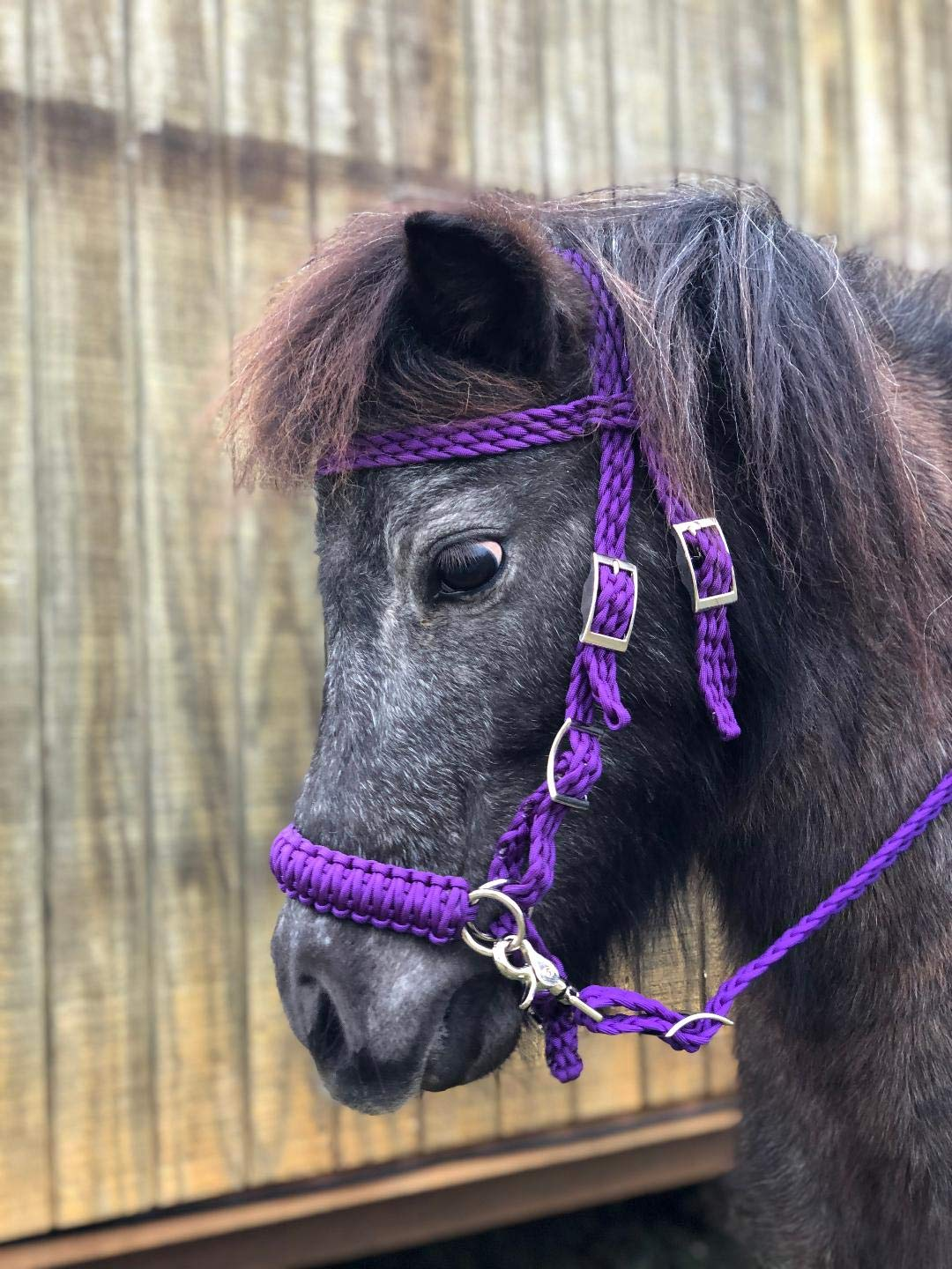 NEW HORSE TACK! PURPLE//BLACK Braided Nylon Bit Less Bridle with Reins