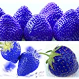Glamaours 300pcs Blue Climbing Strawberry Seeds Tree Seed, Delicious Fruit Seeds for Home & Garden Bonsai Seeds Planting