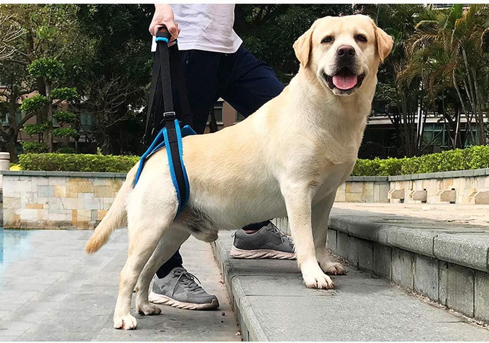 L Rantow R/églable Animal de Compagnie Harnais de Soutien pour Chiens Bretelles molletonn/ées et Respirantes Soutien canin en r/éadaptation