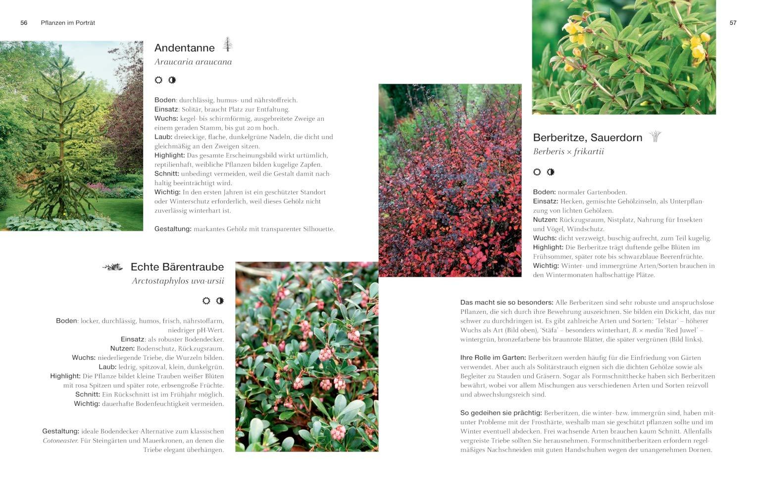 Immergrune Pflanzen Struktur Farbe Und Bluten Gestalten Mit