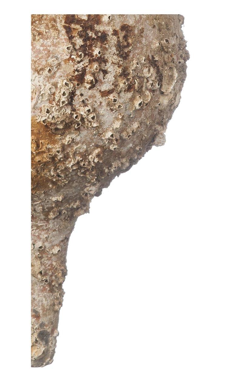 Ánfora de Mar Bética - Pieza Única con Vida Marina, cultivadas de 3 a 5 Años en el Fondo Marino: Amazon.es: Hogar