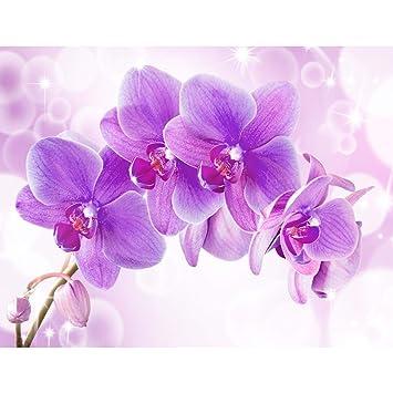 1d693bdd42993 Fototapeten Orchidee Lila Violett 352 x 250 cm Vlies Wand Tapete Wohnzimmer  Schlafzimmer Büro Flur Dekoration Wandbilder XXL Moderne Wanddeko - 100% ...