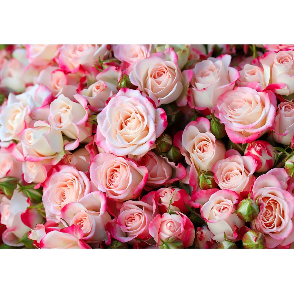 wall26 - Roses Background - Removable Wall Mural | Self-Adhesive Large Wallpaper - 100x144 inches by wall26 (Image #2)
