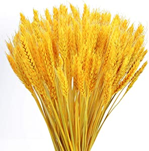 XHXSTORE 100Pcs Dried Golden Wheat Grass Fake Autumn Shrubs Plants Natural Artificial Wheat Dried Flowers for Fireplace Home Kitchen Church Wedding Yard Farmhouse Table Centerpieces Pot Decor