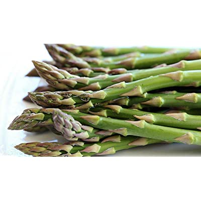 AchmadAnam - 25 Asparagus Roots Jersey Knight - Male Dominate - Tasty - No GMOs, Plant, Tree, Bulb : Garden & Outdoor