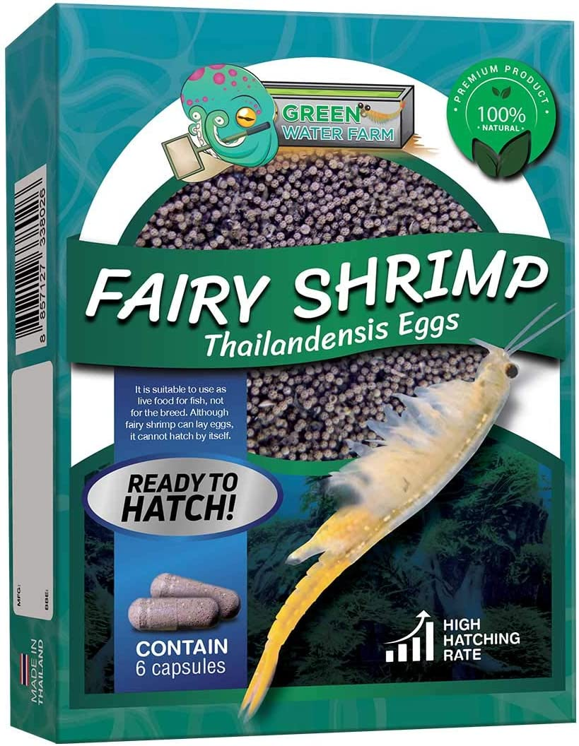 Greenwaterfarm Fairy Shrimp Thailandensis Eggs Live Fish Food for Hatching and Culture Suitable for Feed Betta Fish