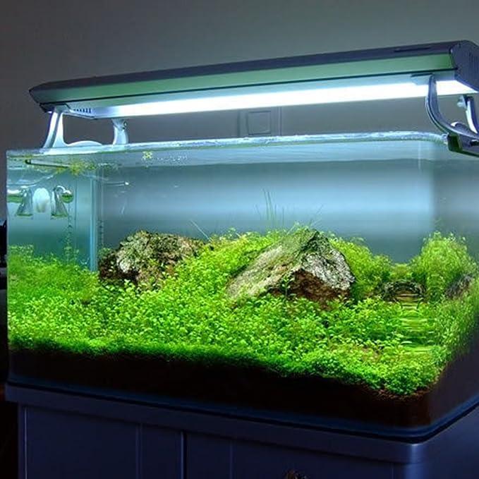 Zantec Semillas de plantas de acuario Decoración de hierba de agua acuática como Planta de primer plano de tanque de peces de jardín: Amazon.es: Hogar