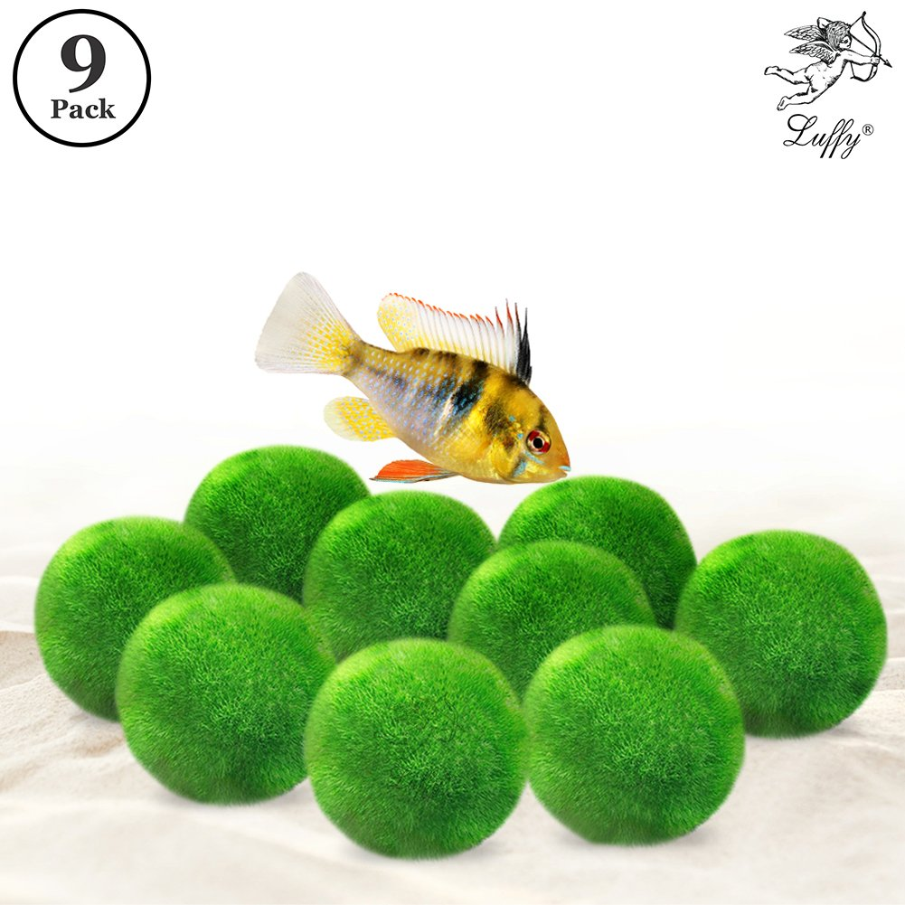 Luffy 9 Marimo Moss Balls - Jumbo Pack Aesthetically Beautiful & Create Healthy Environment - Eco-Friendly, Low Maintenance & Curbs Algae Growth - Shrimps & Snails Love Them
