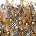 Coceca 300PCS Assorted Chicken Feathers for Various Crafts, Birthday Parties, Wedding and Party Dress-ups