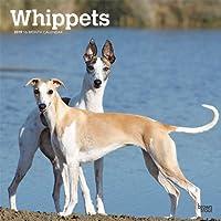 Whippets 2019 Calendar