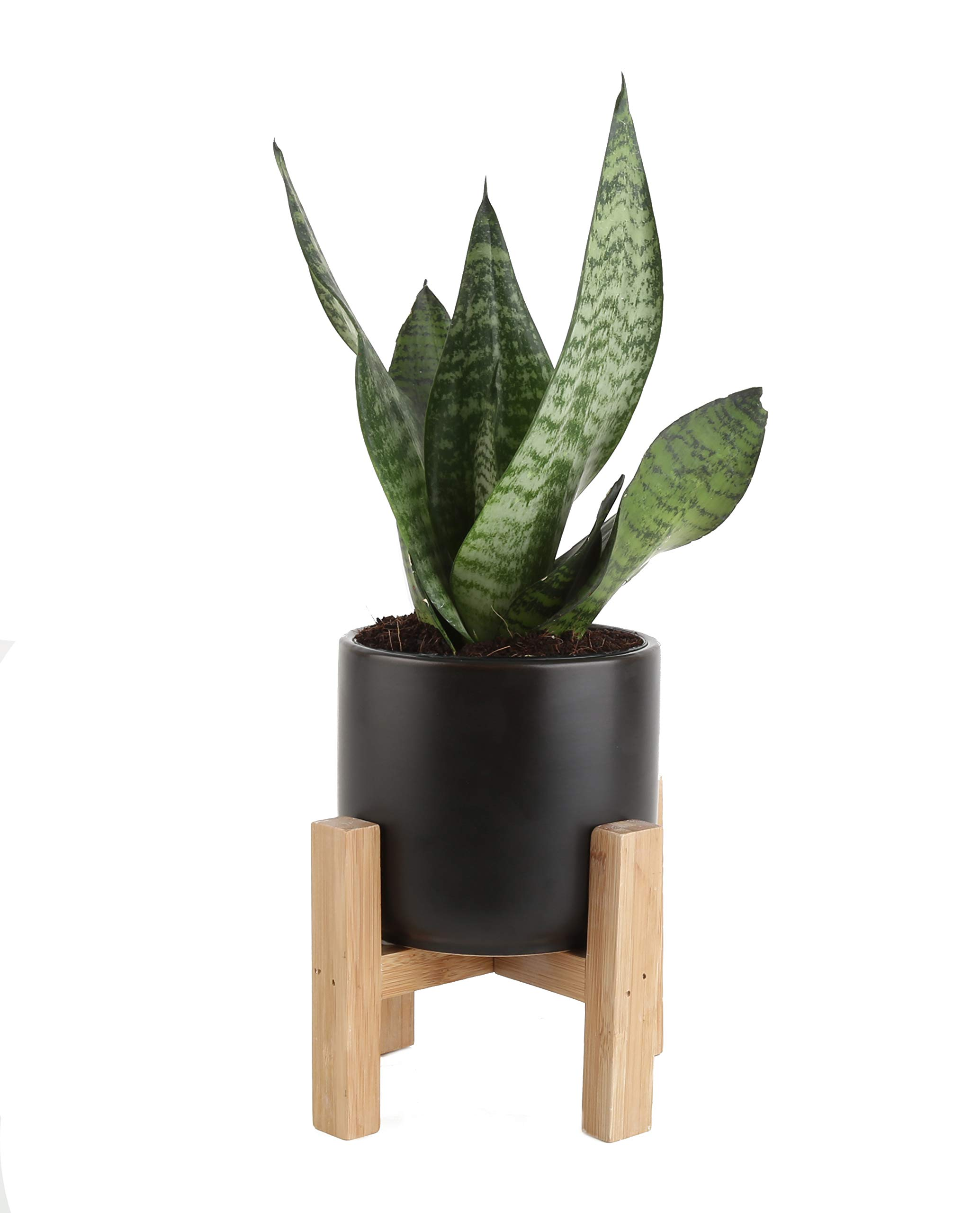 Costa Farms Snake Plant, Sansevieria, with 4.25-Inch Wide Mid-Century Modern Planter and Plant Stand Set, Black, Fits on Shelves/Tabletops