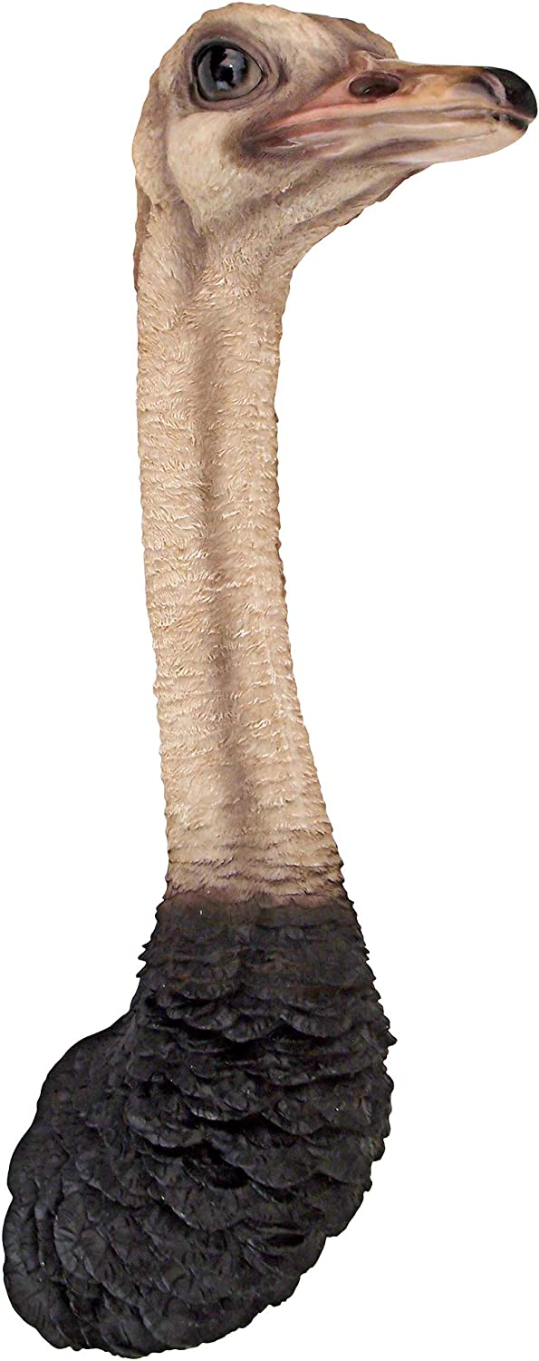 Design Toscano Ostrich Bird Trophy Wall Sculpture, 28 Inches, Full Color