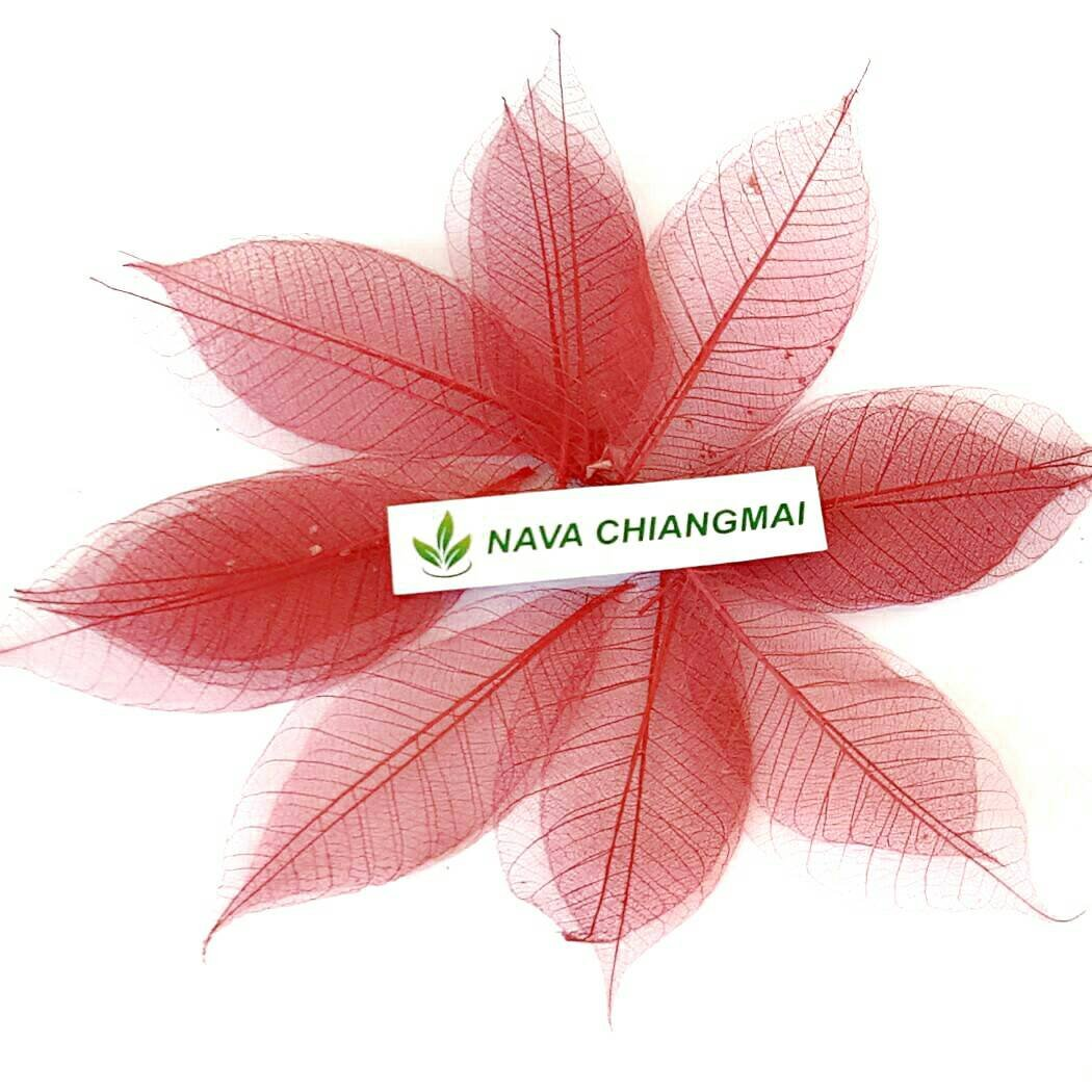 NAVA CHIANGMAI 100 Pcs Rubber Tree Skeleton Leaves Red Color Artificial Leaves Craft Card Scrapbook DIY Handmade Embellishment Decoration Art Product from Thailand