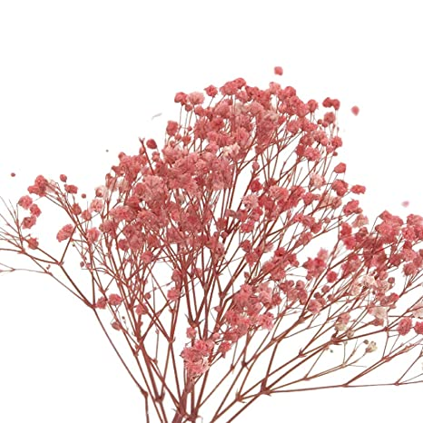 Vkospy 500 Semillas Semillas de Aliento Flores Plantas en ...